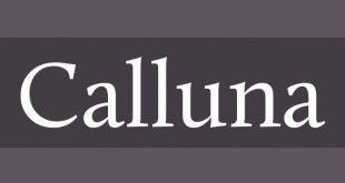 calluna font 310x165 - Calluna Font Free Download