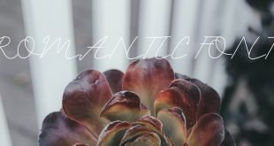 ROMANTIC FONT 310x165 - Romantic Font Free download